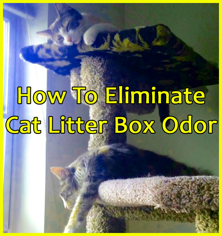 How To Eliminate Cat Litter Box Odor Aircare